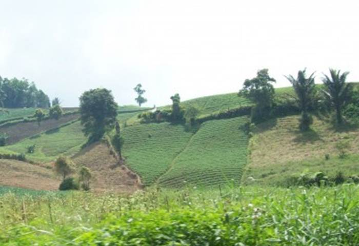 Perkebunan di Desa Rurukan Kota Tomohon (Foto/Ist).