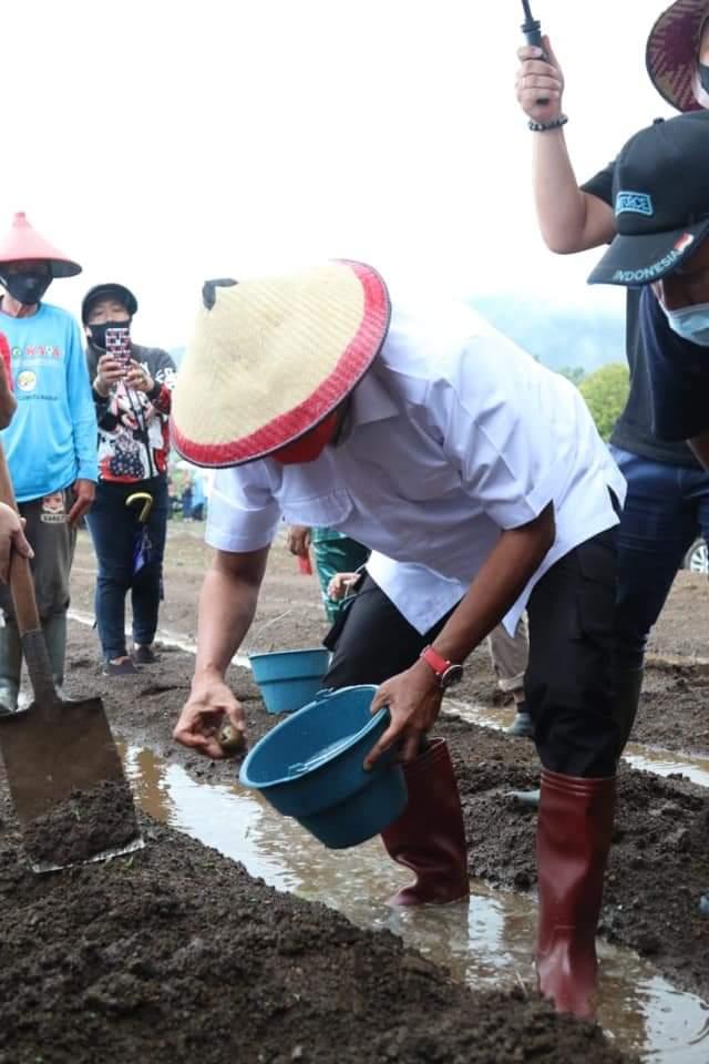 Gubernur OD Tanam Kentang di Modoinding