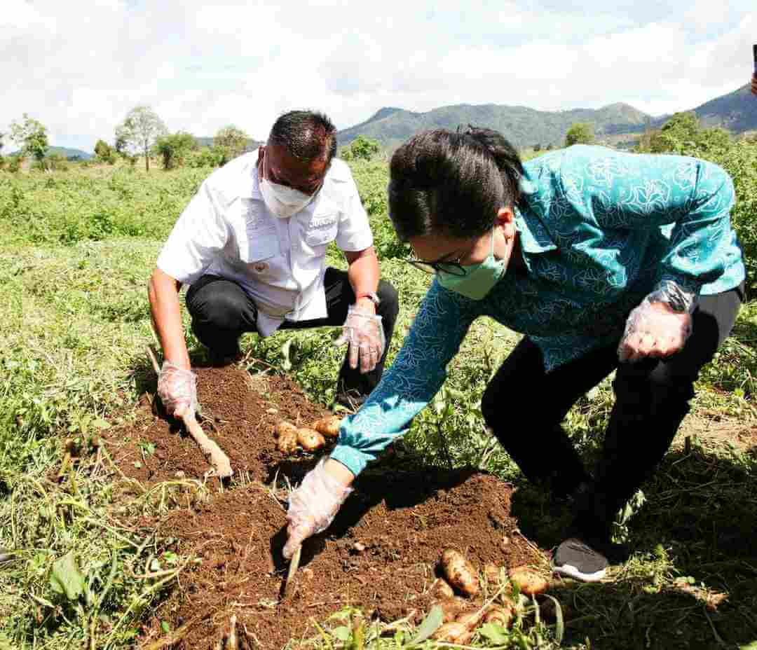 Capaian Komoditi Sulut Unggulan OD-SK Bidang Pertanian Tetap Survive
